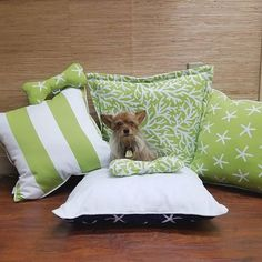 Doggie Cabana Collection with Walfab squeaky bone!