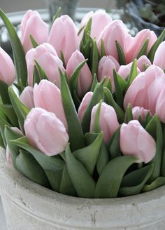 pale pink tulips...so quiet and understated...and yet so elegant sitting in their white plastic tub! Jennie Whitby, Ont.
