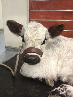 Dat face. by 21 Reasons Cows Are Actually Awesome