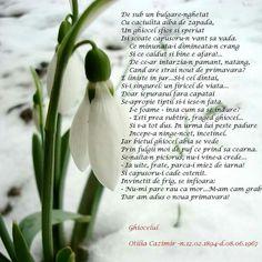 8 Martie, Spring Time, Herbs, Plants, Winter Wonderland, Anniversary, Facebook, Herb, Plant