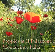 The most beautiful place we ever visited http://www.ilpalazzone.com/il-palazzone-2/poppies-at-il-palazzone/