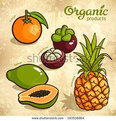 Vector set of exotic fruits: pineapple, orange, mangosteen, papaya - stock vector