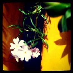 April 5 Tiny