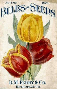 Antique Flower  Seed Packets