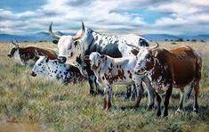 The Big Mondplaas Nguni Oil, – Revisited Cow Painting, Cow Art, Friesian, Art Oil, Cattle, Farm Animals, Pet Birds, Ranger, Livestock