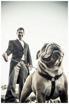 Bulldog Weddings....great picture ideas on how to capture Bruno's role :)