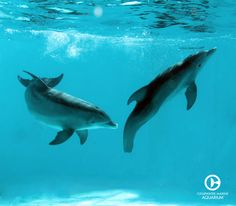 Check out Winter and Panama engaging in some underwater play in 2012.