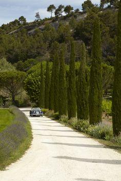 A long limestone gravel driveway. Tall trees in rows. Classic car. Lavender. France. ©La Bastide de Marie, Bonnieux, France