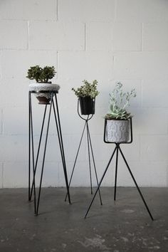 Wire plant stands!