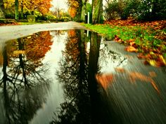 Autumn leaves reflected in rain pools