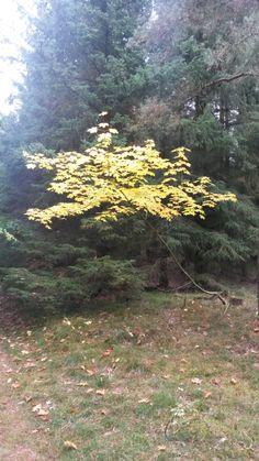 Smuk træ i efteråret