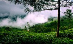 munnar, kerala tea plantations | Recent Photos The Commons Getty Collection Galleries World Map App ...