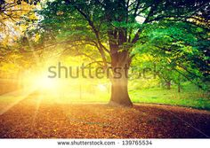 Find Beautiful Park stock images in HD and millions of other royalty-free stock photos, illustrations and vectors in the Shutterstock collection. Thousands of new, high-quality pictures added every day. Sunrise Images, Sunrise Wallpaper, City Wallpaper, Wallpaper Size, Painting Prints, Canvas Prints, Quilting Quotes, Tree Wall Murals, Morning Sunrise