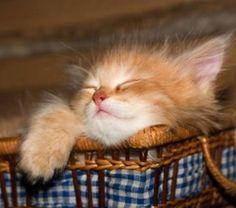 Sleeping Ginger in a basket...