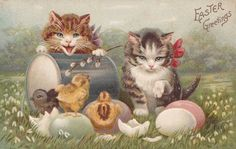 Easter cats & chicks postcard