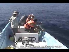 Они спокойно плавали под парусами, когда вдруг вдалеке заметили что-то похожее на мертвого кита. Когда люди подплыли ближе, оказалось, что кит еще жив, но практически не может дышать из-за того, что запутался в сетях. Мужчины сразу же приступили к спасению жизни животного, ведь времени оставалось совсем мало. И это несмотря на то, что подобное спасение могло угрожать их жизням. Что произошло далее, смотрите в этом ролике.