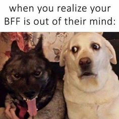 Funny dog memes of the day. This is the compilation of top 60 funny dog memes that will keep you laughing for hours. Don't forget to share. Funny Shit, Funny Memes, Hilarious, Crazy Funny, Funny Laugh, Daily Funny, Fun Funny, Funny Dogs, Funny Animals