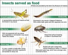 Huge hunger for Itami exhibition on insect eating prompts extended run - try #edibleinsects @ www.buggrub.com  