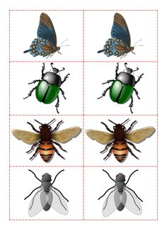ένα ιστολόγιο για το νηπιαγωγείο Early Learning, Kids Learning, Matching Worksheets, Bullet Journal Art, Montessori Materials, Preschool Printables, Bee, Animaux, Nature