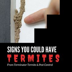 Termite damage often goes unnoticed until it is too late, but there are other signs that tell you if termites may be present. Read about them in this Terminator blog: www.goterminator.com/blog/signs-you-could-have-termites #TerminatorTPC #TermiteDamage #Termites Termite Pest Control, Termite Damage, Signs, Blog, Shop Signs, Blogging, Sign