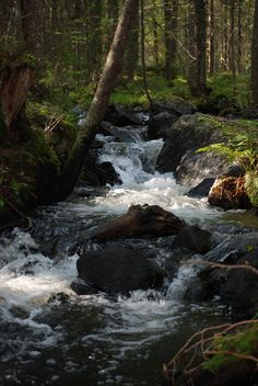 Forest brook in Finland