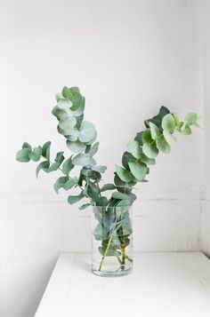 Eucalyptus sprigs in glass vases for smaller touches of green throughout