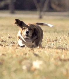 Dieser Hund | Diese 21 Bilder bringen Dich zum Lachen, egal wie schlimm Dein Tag war