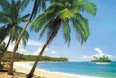 go to a tropical island
