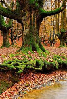 Mossy Roots ~ Sintra, Portugal