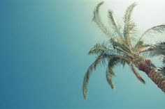 Pictures lone palm tree, sky, sun - Wallpaper 1920x1080, picture № 1529