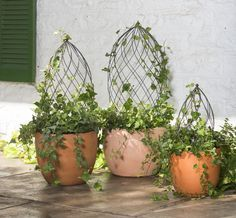 Twist Topiary Frames from NGB member Gardener's Supply Company - National Garden Bureau Topiary Garden, Garden Art, Garden Plants, Indoor Plants, House Plants, Garden Design, Container Plants, Container Gardening, Gardening Supplies