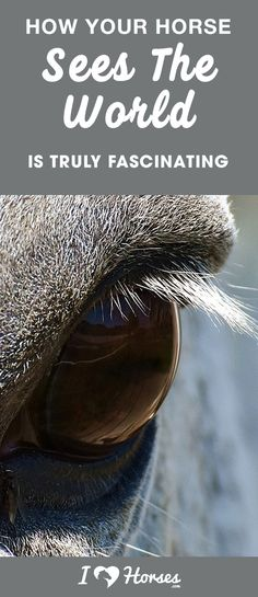 Once you learn about how your horse sees, you will be in awe by how much trust they have in us! Most Beautiful Animals, Beautiful Horses, Pretty Horses, Horse Love, Horse Care Tips, Horse Facts, Horse Videos, Horse Training Tips, Show Horses
