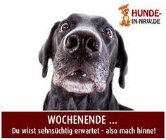 hunde-in-nrw.de - Hunde-in-NRW - Das Online-Portal für Hundefreunde - NEWS
