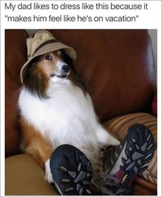Funny and Great Dog Memes That will Make You Laugh. Here are 45 funny happy dog memes that will brighten your Super Funny Pictures, Funny Animal Pictures, Funny Animals, Cute Animals, Funny Dog Memes, Funny Dogs, Cute Dogs, Funny Picture Jokes, Funny Stuff