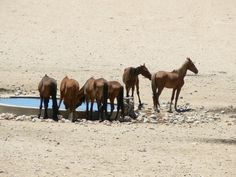 Le Cheval de Namibie - Le Cheval de Namibie à l'abreuvoir