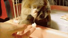 Cute Animal GIFs | Community Post: 30 Things BuzzFeed Staffers Love To Write About