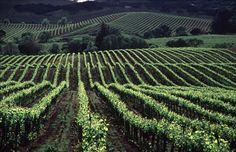 sonoma+napa | Napa and Sonoma Valleys, California, USA, Vineyard