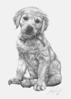 drawing labradors | Golden Labrador Pup by Lucas-21