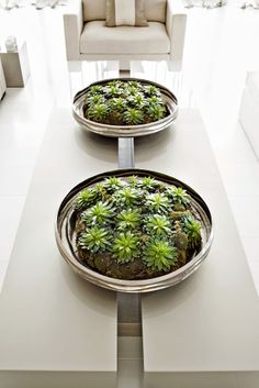 Large, shallow, nickel bowls are filled with green moss and echeveria.