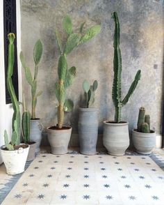 concret and raw clay planter on pretty tiles and even prettier wall