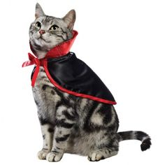 The vampire cat costume features a satiny bright red and black cape designed with easy-to-use Velcro fasteners ($3.99) at petco.com (check stores for availability). : Stltoday