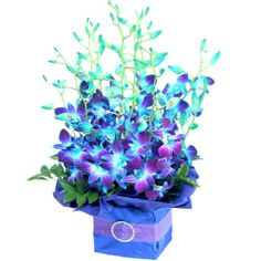 Orchids represent strength and beauty. Shop your Gold Coast florist today for the perfect floral arrangements that can be suited for any situation! Blue Orchid Flower, Orchid Bouquet, Floral Bouquets, Blue Flowers, Blue Dendrobium Orchids, Purple Orchids, Purple Wedding, Wedding Flowers, Wedding Bouquet