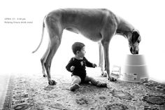 Brought home when she was just 7 weeks old, Gracie the Great Dane instantly became an integral part of Erin Vey's life. Huge Dogs, Giant Dogs, Great Dane Dogs, I Love Dogs, Weimaraner, Rhodesian Ridgeback, Photo D Art, Pet Photographer, Gentle Giant