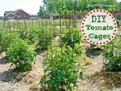 Hello everyone! You haven't heard from me in a while. That's because I've been real busy in our garden. Here is picture of the tomato cages ...
