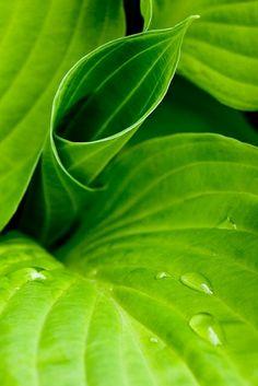 leaves and water drops by anna.khartovskaya