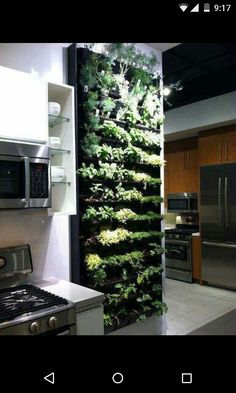 Living wall in kitchen