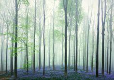 Photo Forest Dream by Kilian Schönberger on 500px