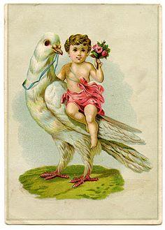 Vintage Valentine Graphic - Cherub Riding a Dove - The Graphics Fairy
