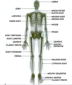 Přehled názvů hlavních kostí. Human Body, Science, Education, Biology, Anatomy, Flag, Teaching, Science Comics, Onderwijs