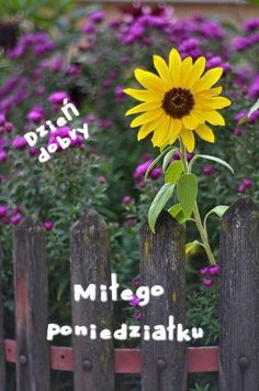 Happy Flowers, Purple Flowers, Wild Flowers, Beautiful Flowers, Sun Flowers, Sunflowers And Daisies, Splash Photography, My Secret Garden, Beautiful Gardens